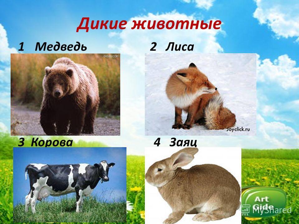 Дикие животные 1Медведь 2 Лиса 3 Корова 4 Заяц