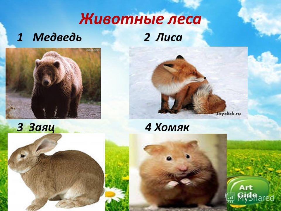 Животные леса 1Медведь 2 Лиса 3 Заяц 4 Хомяк