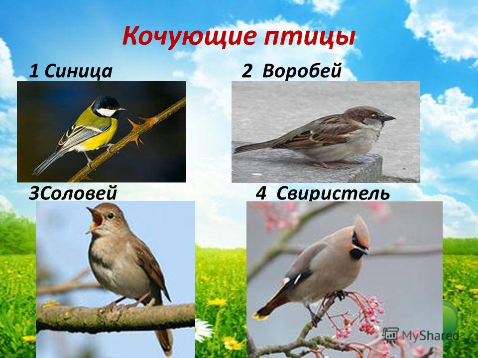 Кочующие птицы 1 Синица 2 Воробей 3Соловей 4 Свиристель