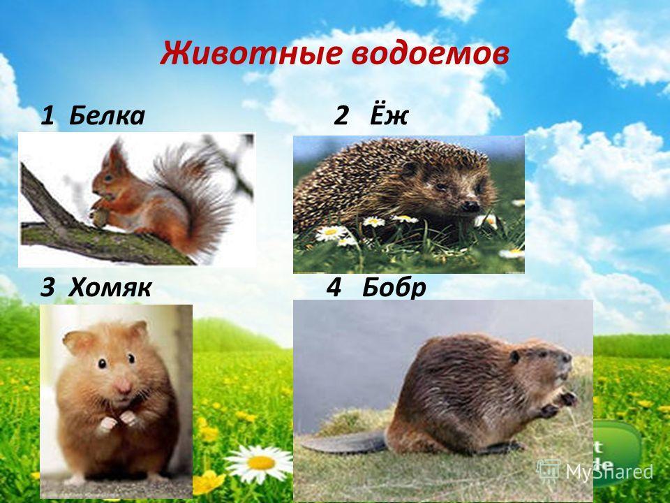 Животные водоемов 1 Белка 2 Ёж 3 Хомяк 4 Бобр