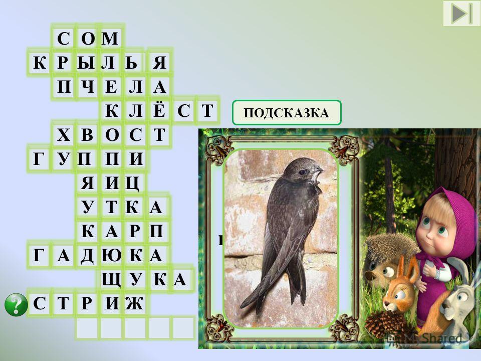 СОМ Л Е К О П И Т А Ю Щ И КРЫЬЯ ПЧАЛ ЛЁСТ ГУПИ ЯЦ ГАДКА УКА СТРЖ КРП ХВСТ УКА ПОДСКАЗКА Птица, кормящаяся в воздухе