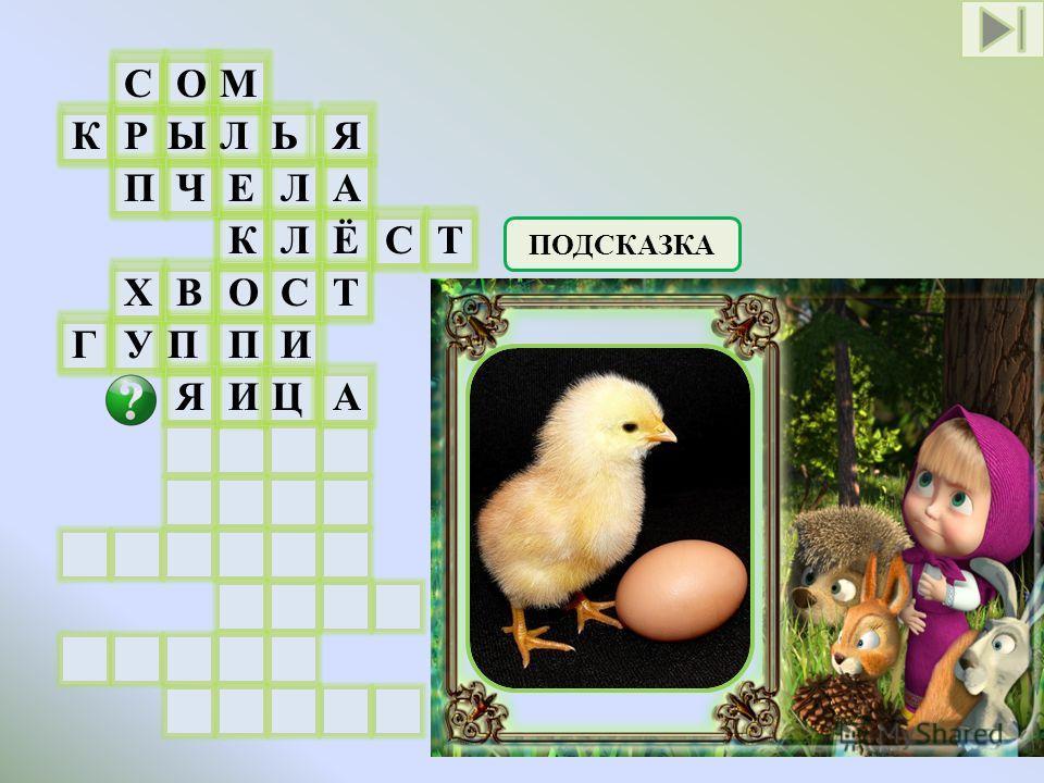 СОМ Л Е К О П И КРЫЬЯ ПЧАЛ ЛЁСТ ГУПИ ЯЦ ХВСТ ПОДСКАЗКА Из чего появляются птенцы у птиц А