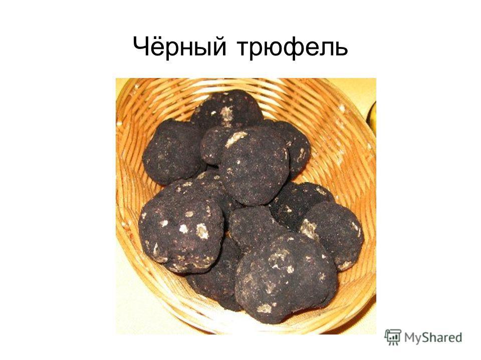 Чёрный трюфель