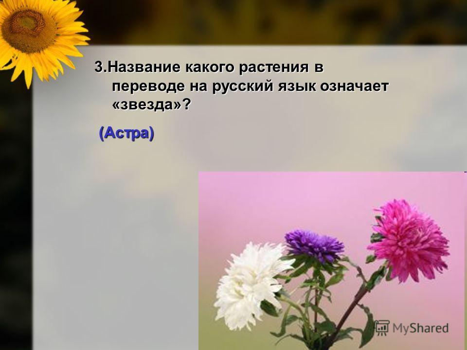 9 3. Название какого растения в переводе на русский язык означает «звезда»? (Астра) (Астра)