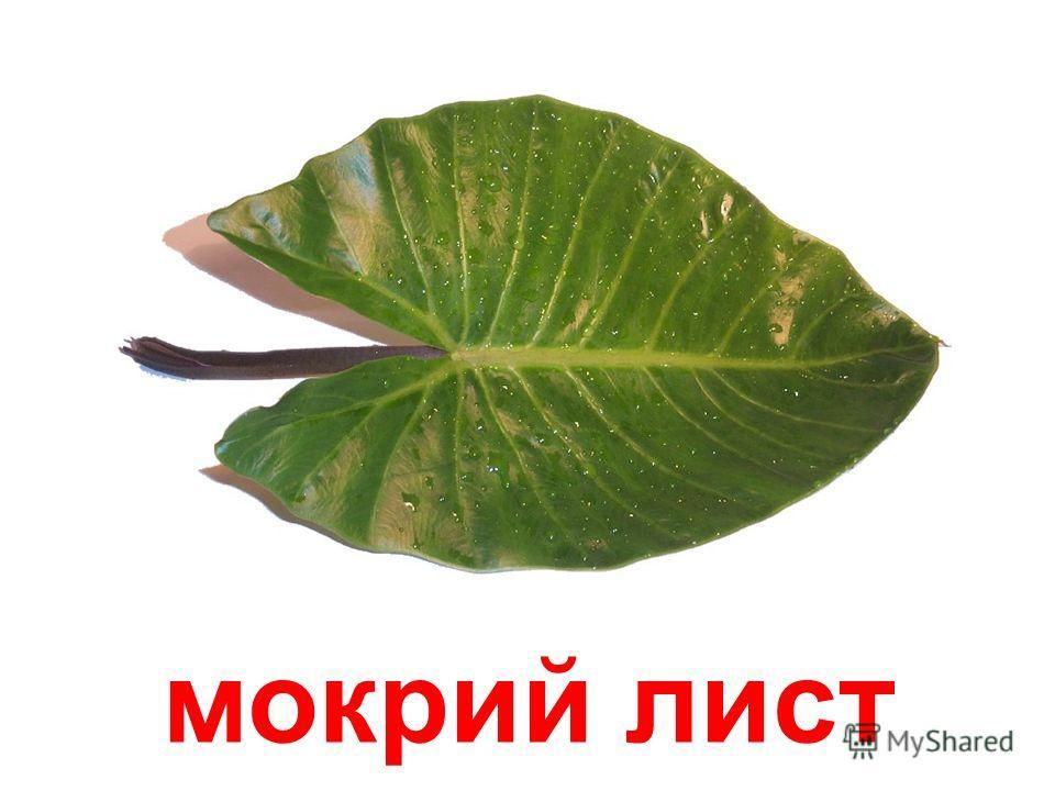 сухий лист