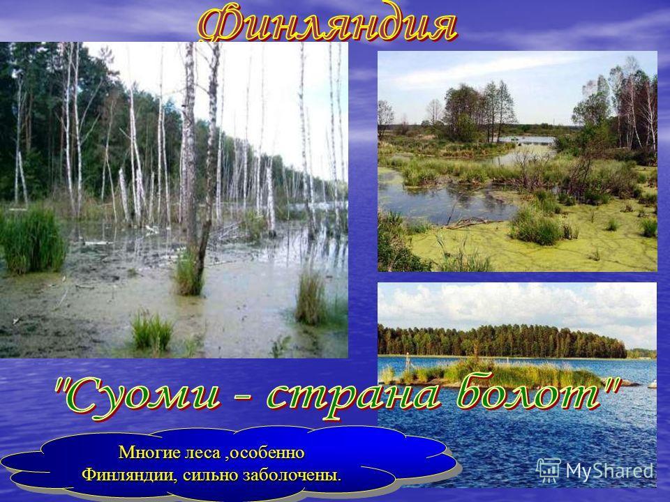 Многие леса,особенно Финляндии, сильно заболочены. Многие леса,особенно Финляндии, сильно заболочены.