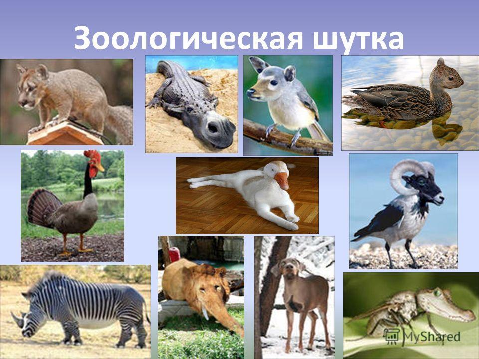 Зоологическая шутка