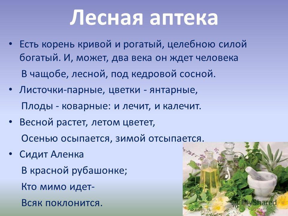 Лесная аптека Есть корень кривой и рогатый, целебною силой богатый. И, может, два века он ждет человека В чащобе, лесной, под кедровой сосной. Листочки-парные, цветки - янтарные, Плоды - коварные: и лечит, и калечит. Весной растет, летом цветет, Осен