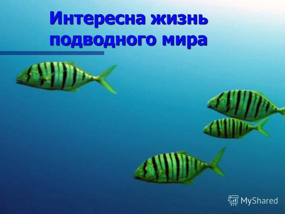 Интересна жизнь подводного мира