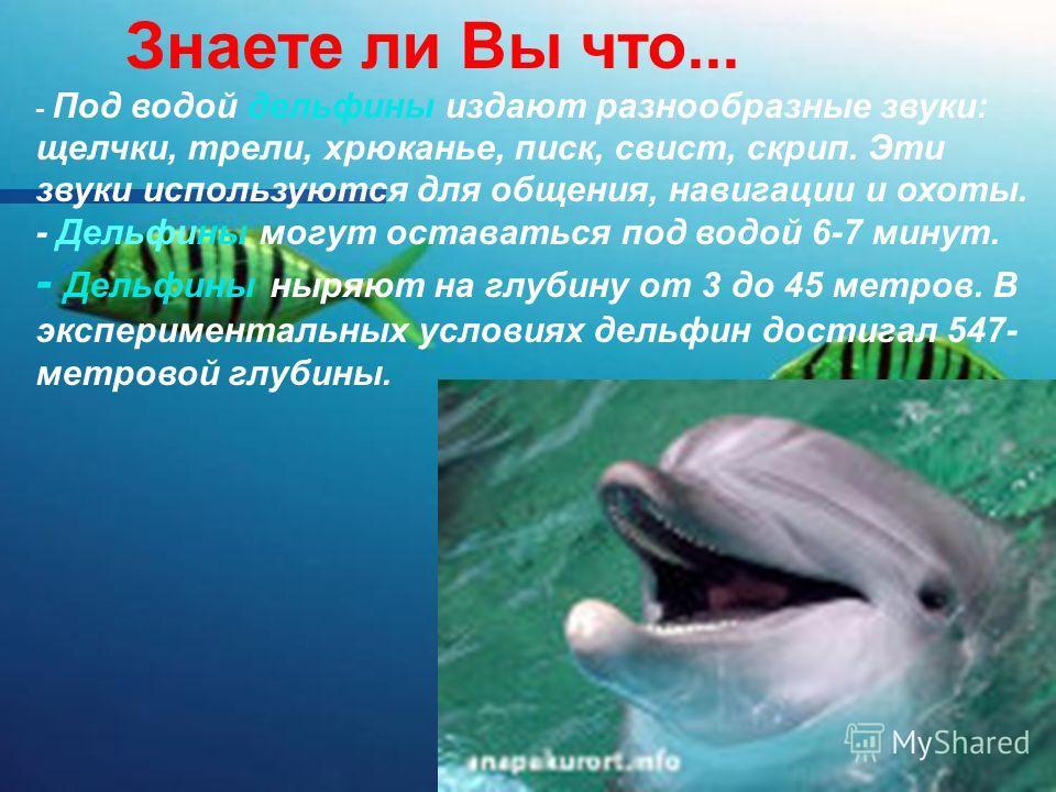 Знаете ли Вы что... - Под водой дельфины издают разнообразные звуки: щелчки, трели, хрюканье, писк, свист, скрип. Эти звуки используются для общения, навигации и охоты. - Дельфины могут оставаться под водой 6-7 минут. - Дельфины ныряют на глубину от