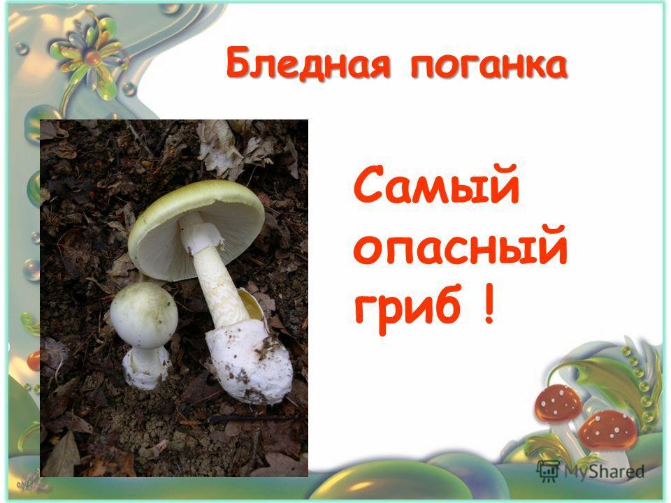 Бледная поганка Самый опасный гриб !