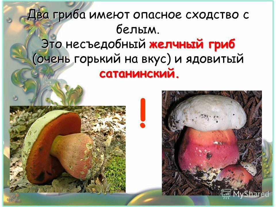 Два гриба имеют опасное сходство с белым. Это несъедобный желчный гриб (очень горький на вкус) и ядовитый сатанинский. !