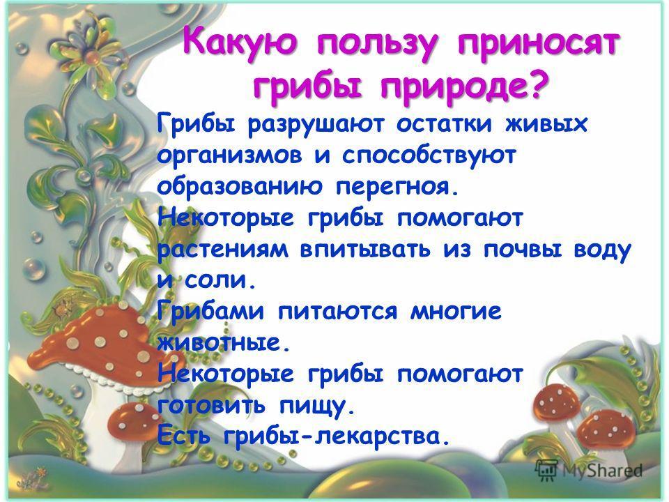Какую пользу приносят грибы природе? Грибы разрушают остатки живых организмов и способствуют образованию перегноя. Некоторые грибы помогают растениям впитывать из почвы воду и соли. Грибами питаются многие животные. Некоторые грибы помогают готовить
