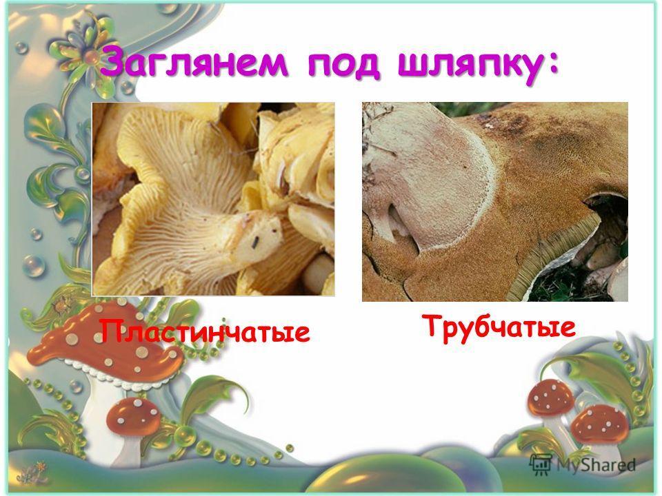 Заглянем под шляпку: Пластинчатые Трубчатые