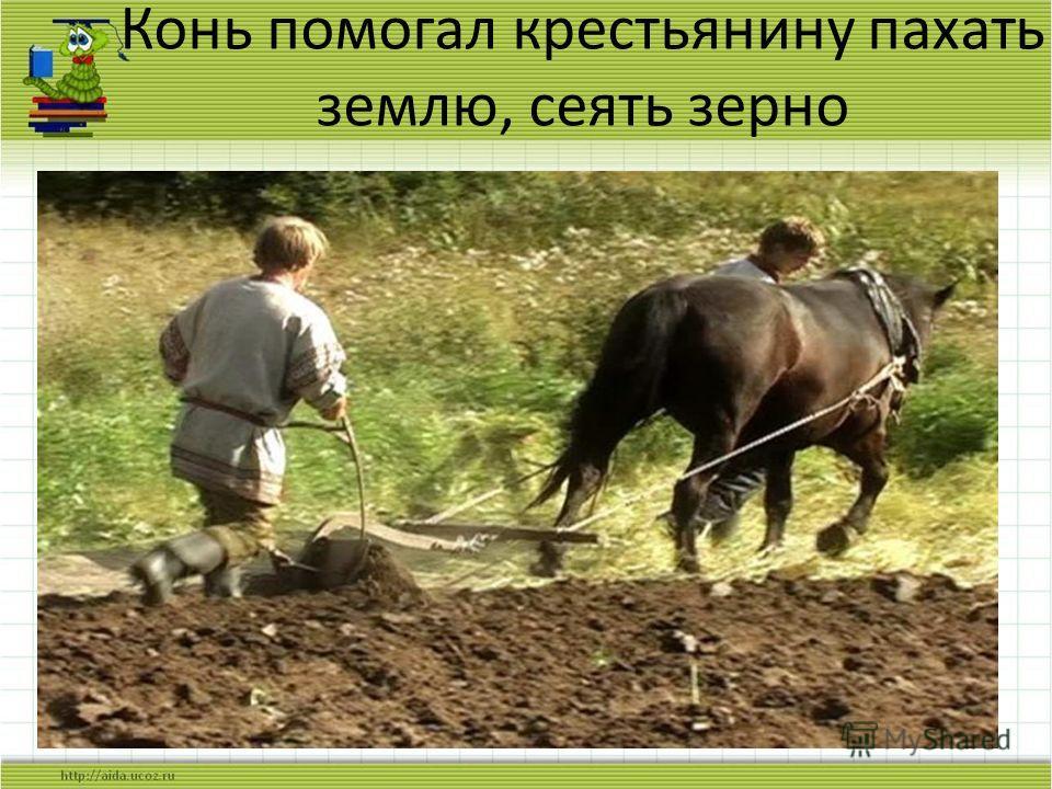 Конь помогал крестьянину пахать землю, сеять зерно