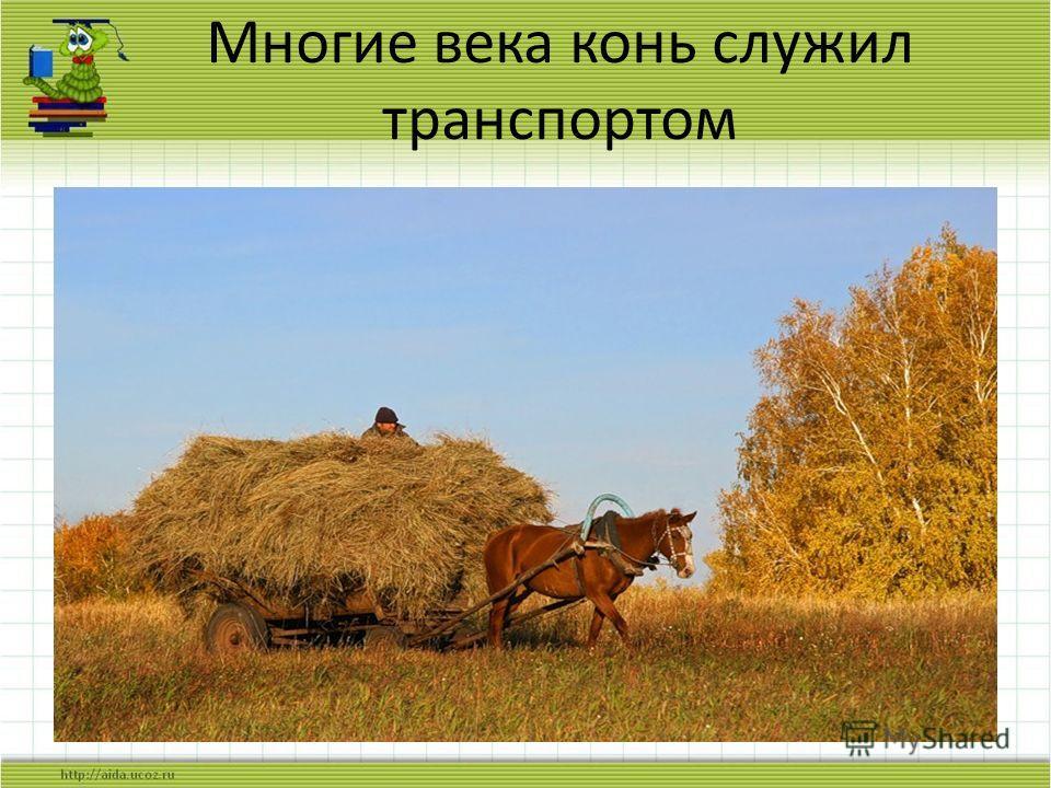 Многие века конь служил транспортом
