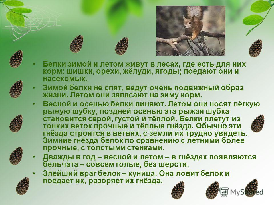 Белки зимой и летом живут в лесах, где есть для них корм: шишки, орехи, жёлуди, ягоды; поедают они и насекомых. Зимой белки не спят, ведут очень подвижный образ жизни. Летом они запасают на зиму корм. Весной и осенью белки линяют. Летом они носят лёг