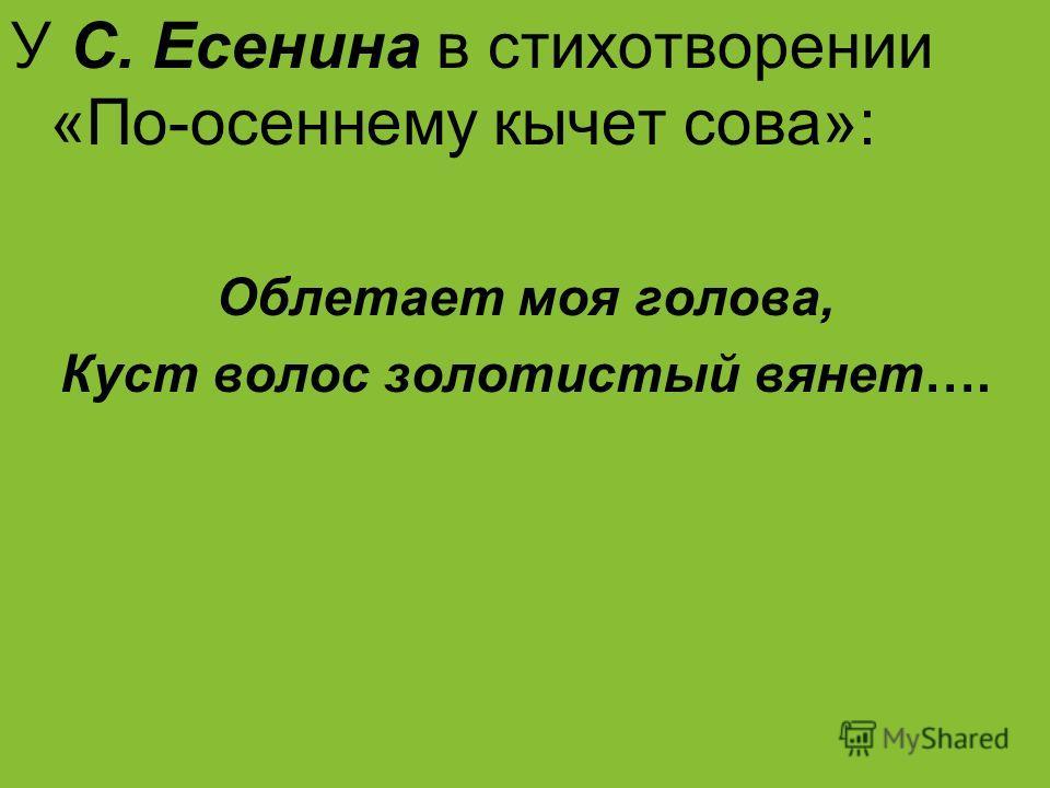 У С. Есенина в стихотворении «По-осеннему кычет сова»: Облетает моя голова, Куст волос золотистый вянет….