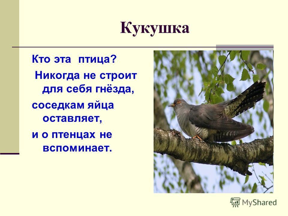 Кукушка Кто эта птица? Никогда не строит для себя гнёзда, соседкам яйца оставляет, и о птенцах не вспоминает.