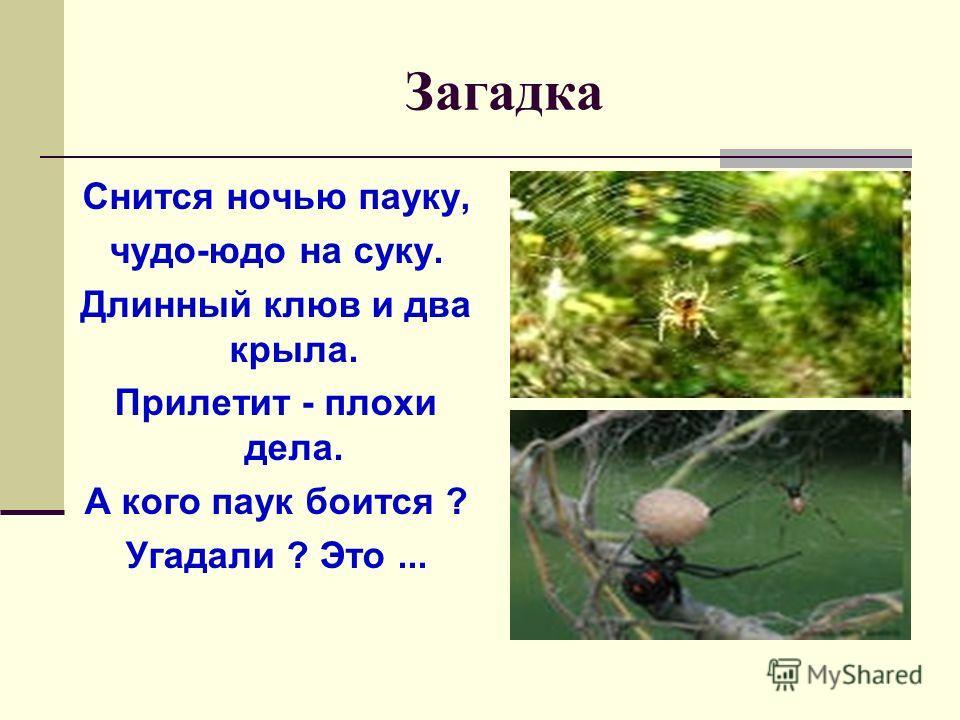 Загадка Снится ночью пауку, чудо-юдо на суку. Длинный клюв и два крыла. Прилетит - плохи дела. А кого паук боится ? Угадали ? Это...