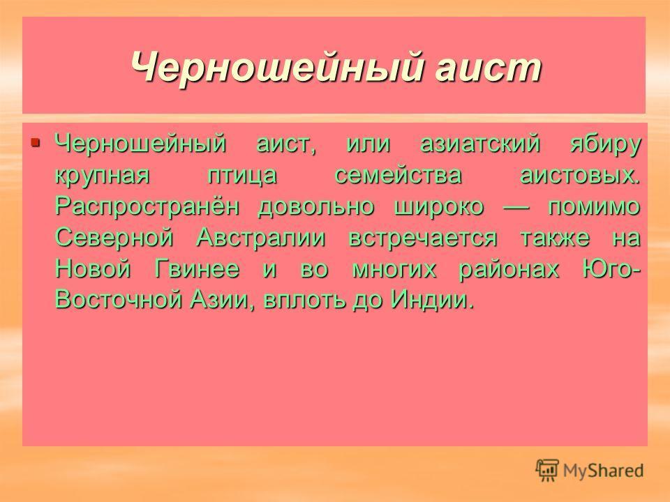 Черношейный аист Черношейный аист, или азиатский ябиру крупная птица семейства аистовых. Распространён довольно широко помимо Северной Австралии встречается также на Новой Гвинее и во многих районах Юго- Восточной Азии, вплоть до Индии. Черношейный а