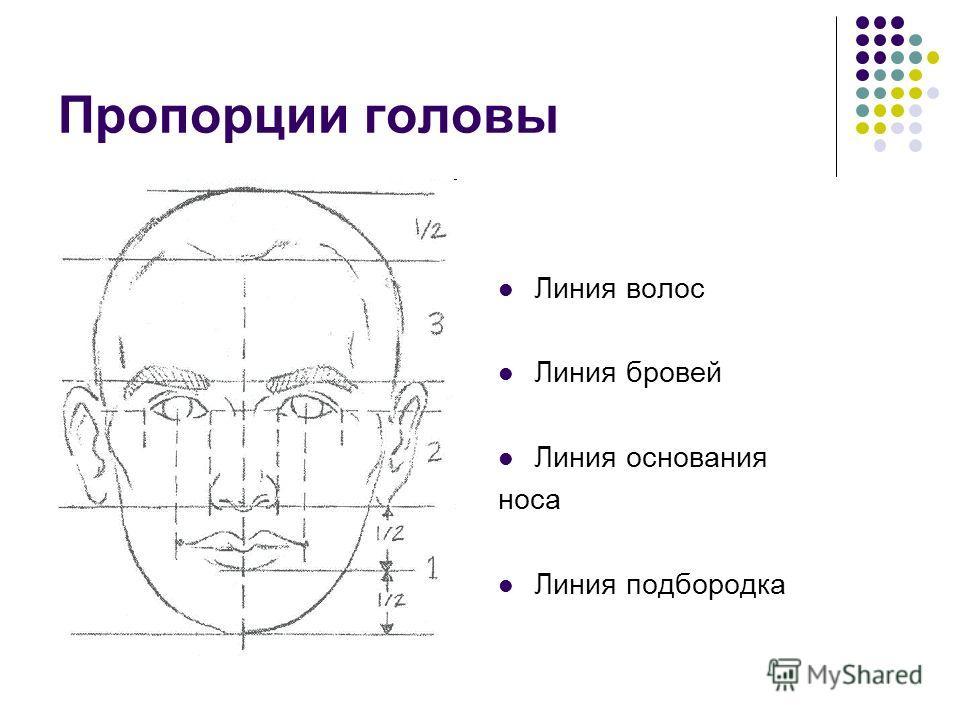 Пропорции головы Линия волос Линия бровей Линия основания носа Линия подбородка