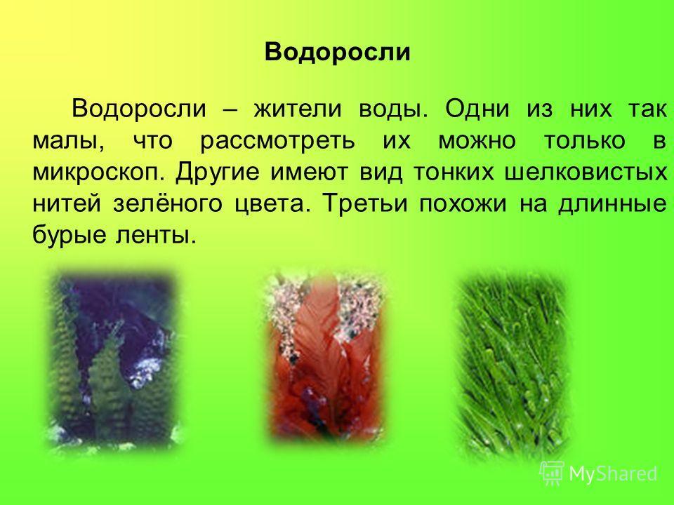 Водоросли Водоросли – жители воды. Одни из них так малы, что рассмотреть их можно только в микроскоп. Другие имеют вид тонких шелковистых нитей зелёного цвета. Третьи похожи на длинные бурые ленты.