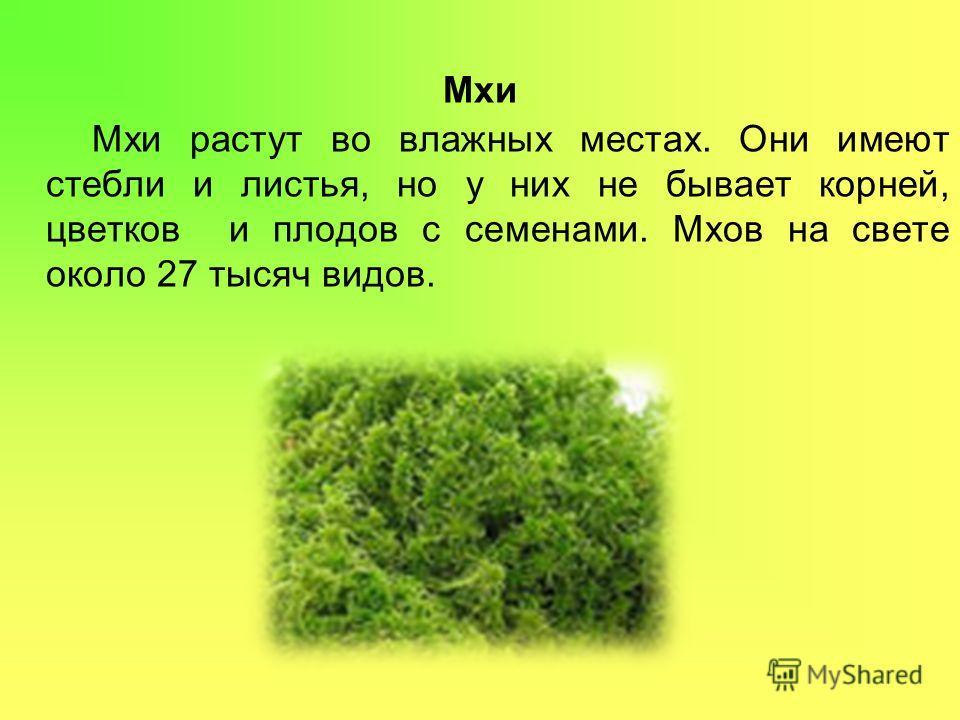 Мхи Мхи растут во влажных местах. Они имеют стебли и листья, но у них не бывает корней, цветков и плодов с семенами. Мхов на свете около 27 тысяч видов.