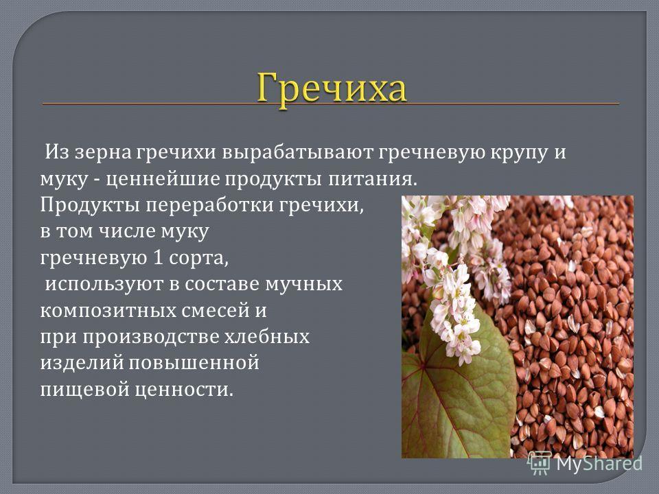 Из зерна гречихи вырабатывают гречневую крупу и муку - ценнейшие продукты питания. Продукты переработки гречихи, в том числе муку гречневую 1 сорта, используют в составе мучных композитных смесей и при производстве хлебных изделий повышенной пищевой