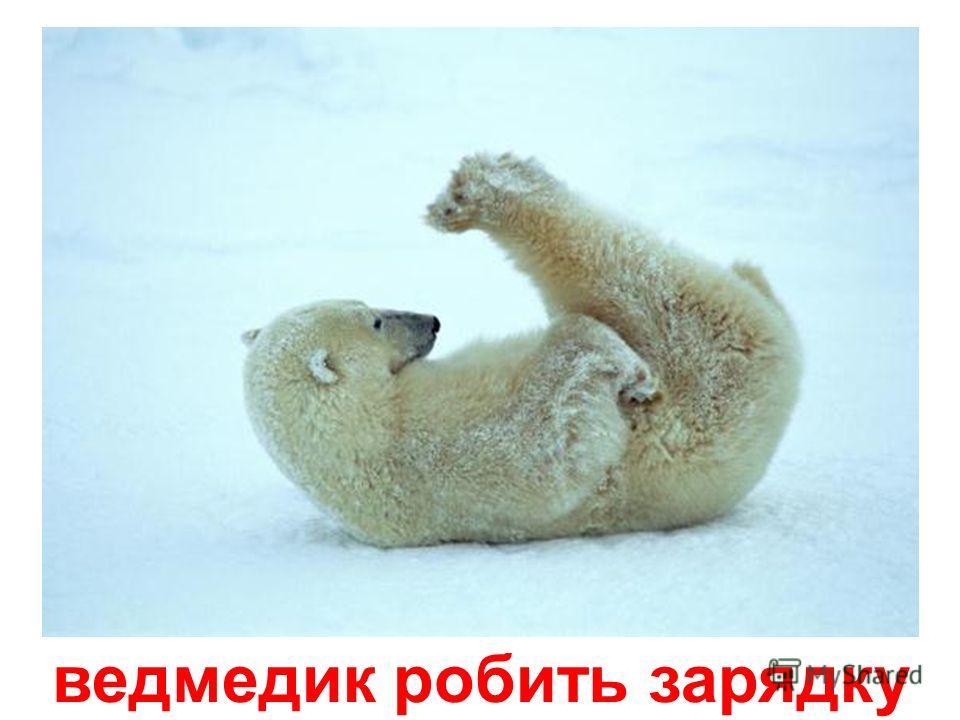 ведмедик відпочиває
