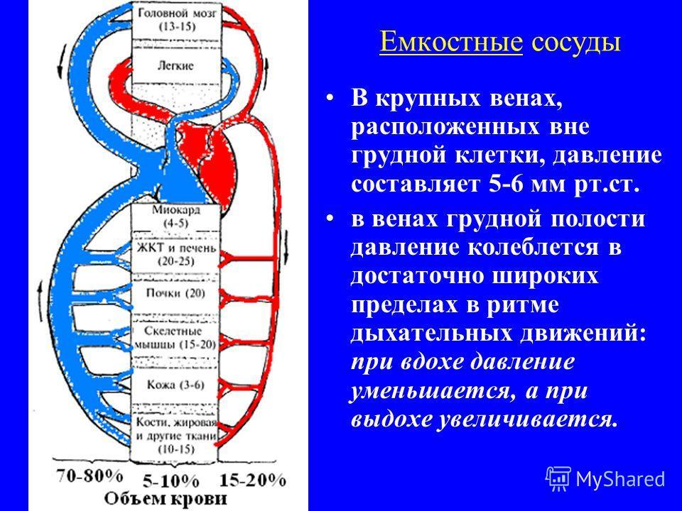 Емкостные сосуды В крупных венах, расположенных вне грудной клетки, давление составляет 5-6 мм рт.ст. в венах грудной полости давление колеблется в достаточно широких пределах в ритме дыхательных движений: при вдохе давление уменьшается, а при выдохе