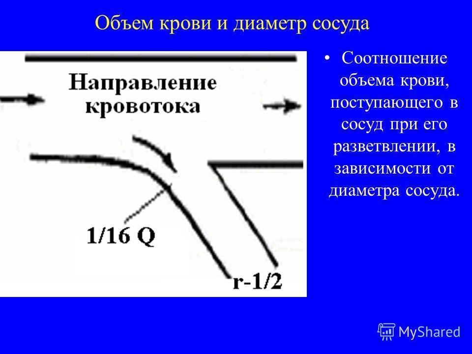 Объем крови и диаметр сосуда Соотношение объема крови, поступающего в сосуд при его разветвлении, в зависимости от диаметра сосуда.