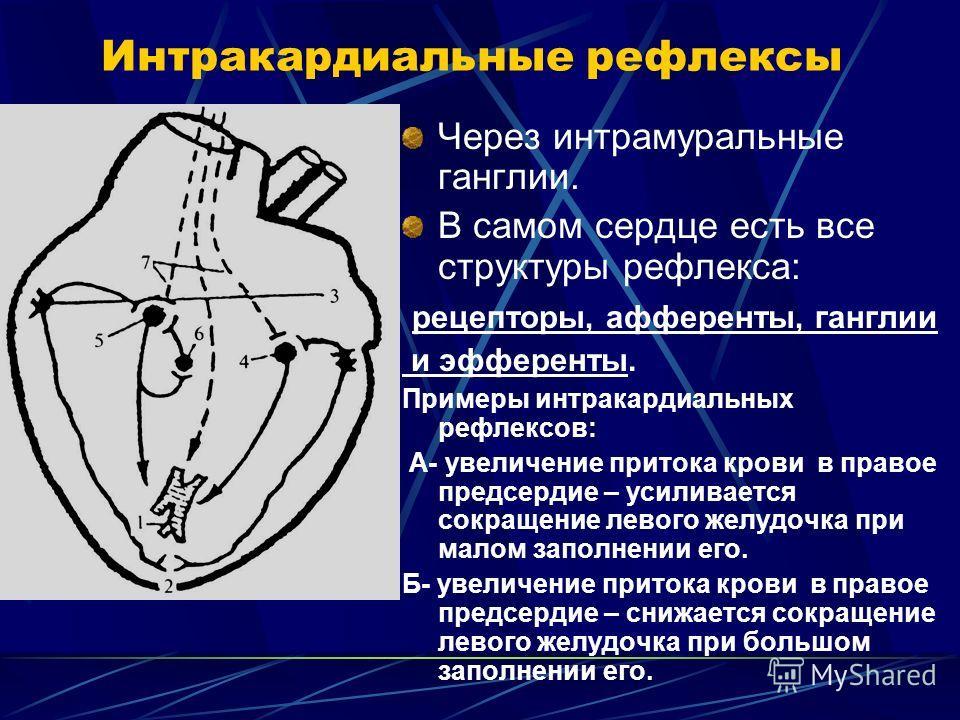 Интракардиальные рефлексы Через интрамуральные ганглии. В самом сердце есть все структуры рефлекса: рецепторы, афференты, ганглии и эфференты. Примеры интракардиальных рефлексов: А- увеличение притока крови в правое предсердие – усиливается сокращени