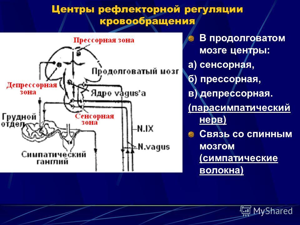 Центры рефлекторной регуляции кровообращения В продолговатом мозге центры: а) сенсорная, б) прессорная, в) депрессорная. (парасимпатический нерв) Связь со спинным мозгом (симпатические волокна)