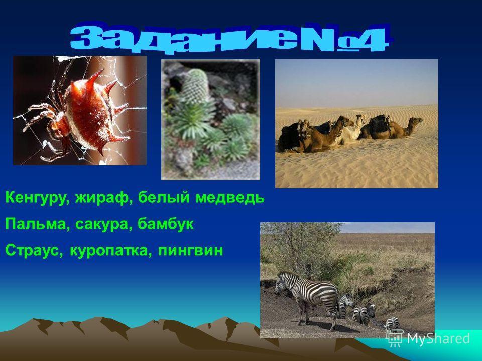 Кенгуру, жираф, белый медведь Пальма, сакура, бамбук Страус, куропатка, пингвин