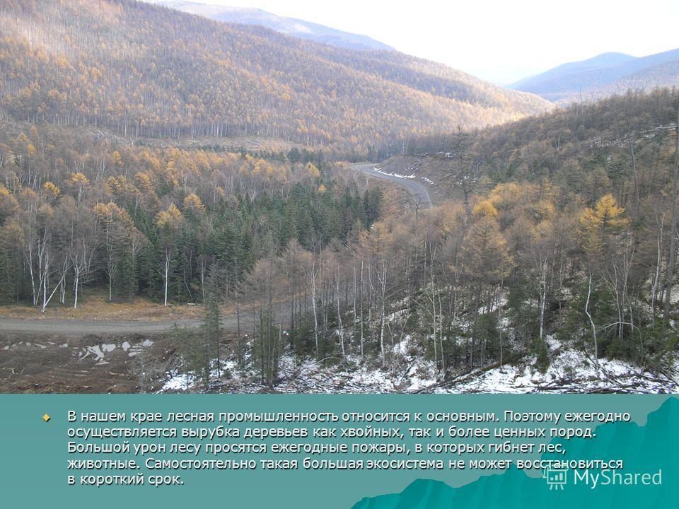 В нашем крае лесная промышленность относится к основным. Поэтому ежегодно осуществляется вырубка деревьев как хвойных, так и более ценных пород. Большой урон лесу просятся ежегодные пожары, в которых гибнет лес, животные. Самостоятельно такая большая