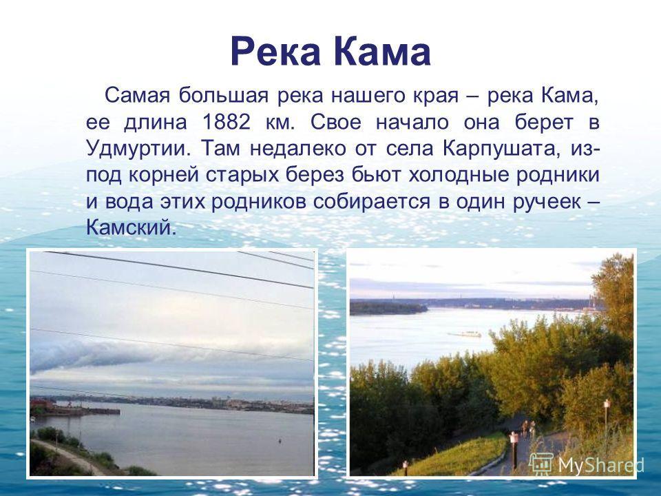 Река Кама Самая большая река нашего края – река Кама, ее длина 1882 км. Свое начало она берет в Удмуртии. Там недалеко от села Карпушата, из- под корней старых берез бьют холодные родники и вода этих родников собирается в один ручеек – Камский.