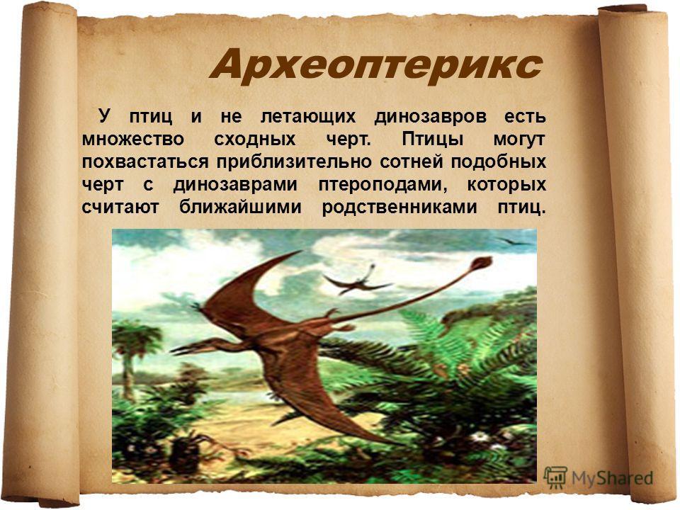 Археоптерикс У птиц и не летающих динозавров есть множество сходных черт. Птицы могут похвастаться приблизительно сотней подобных черт с динозаврами птероподами, которых считают ближайшими родственниками птиц.