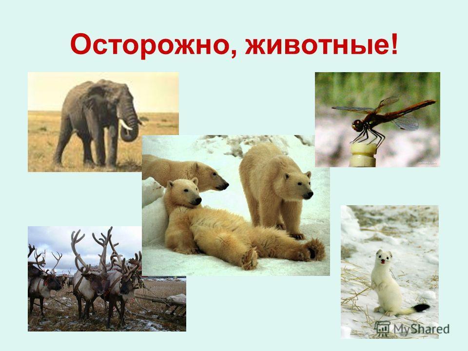 Осторожно, животные!