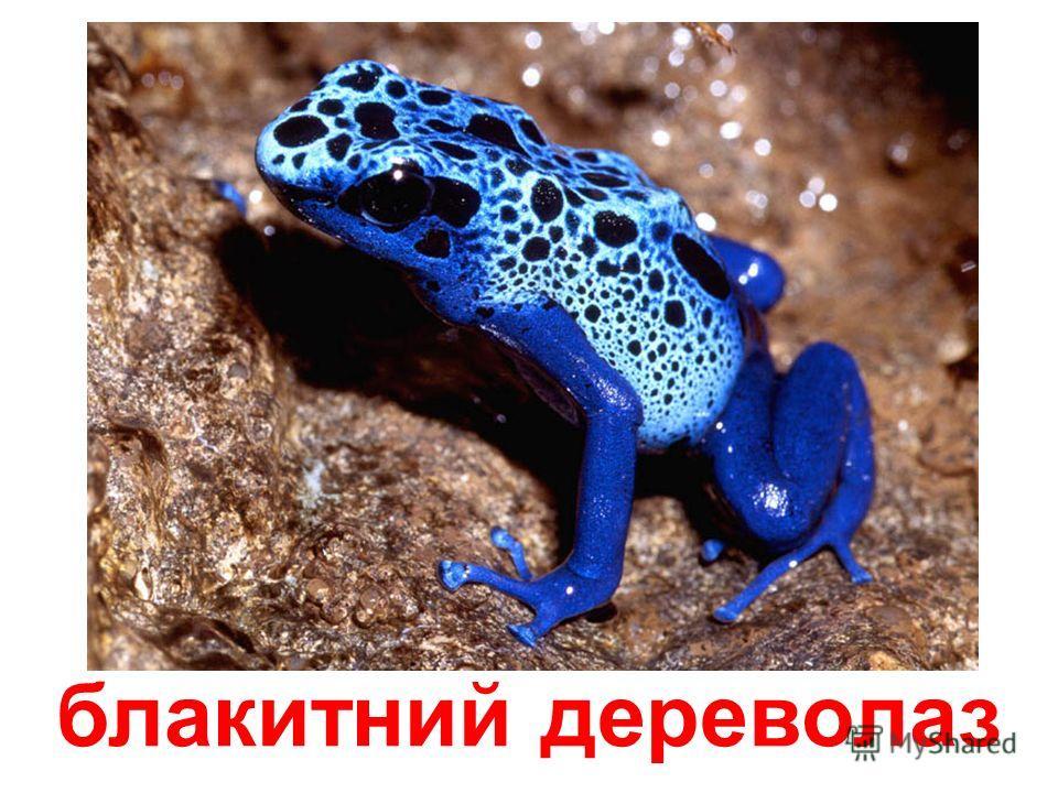 плямиста стрибунка
