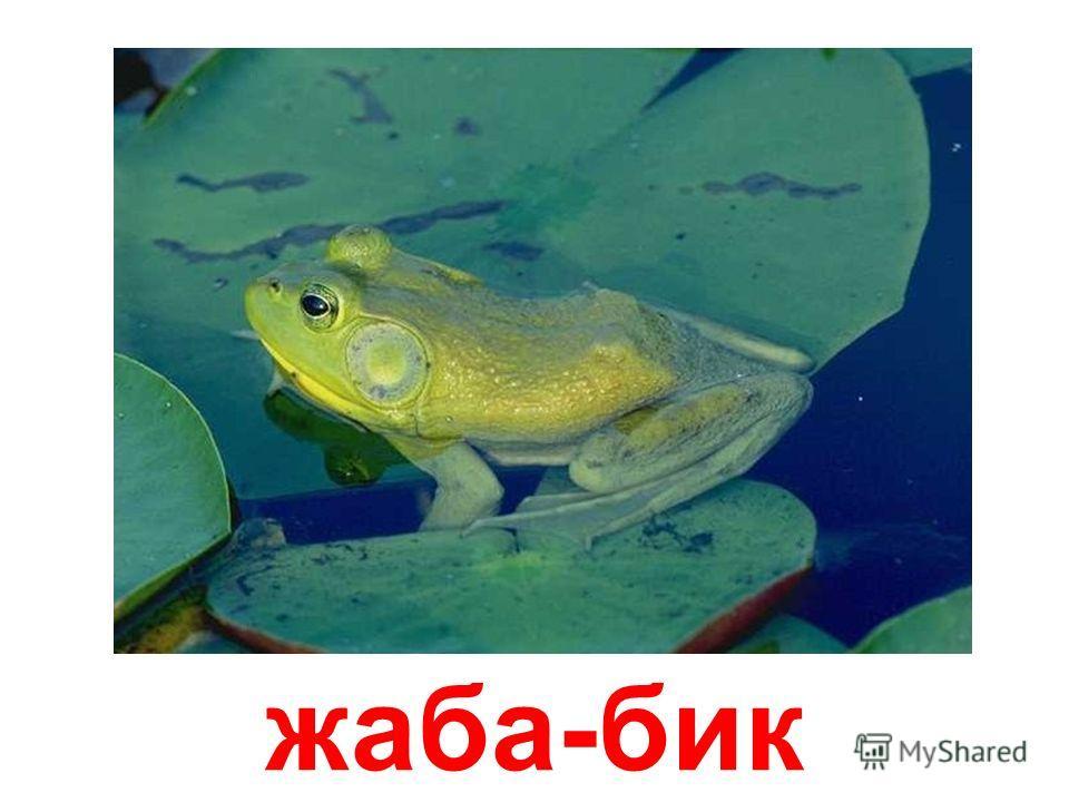 очеретяная жаба