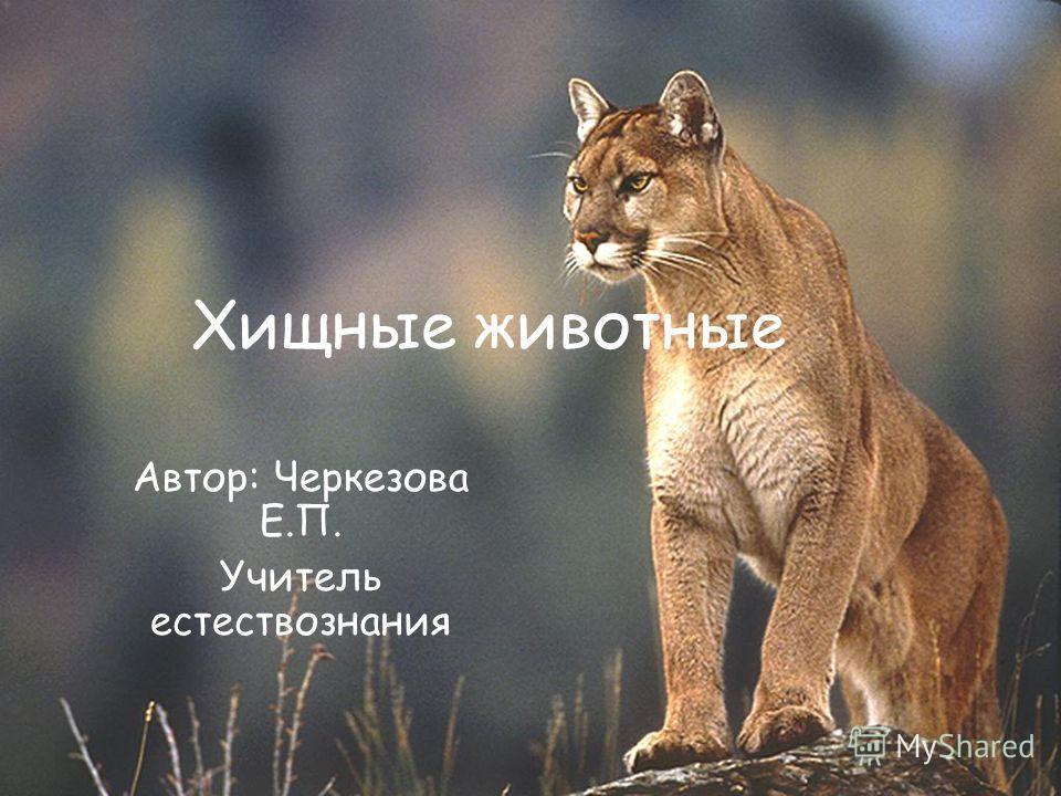 Хищные животные Автор: Черкезова Е.П. Учитель естествознания