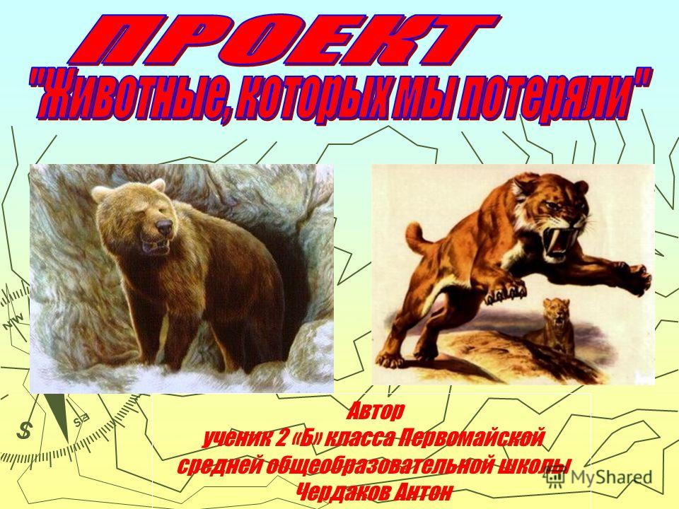 Автор ученик 2 «Б» класса Первомайской средней общеобразовательной школы Чердаков Антон