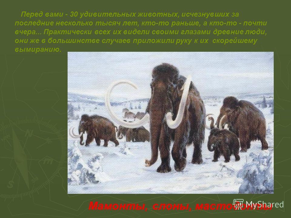 Перед вами - 30 удивительных животных, исчезнувших за последние несколько тысяч лет, кто-то раньше, а кто-то - почти вчера... Практически всех их видели своими глазами древние люди, они же в большинстве случаев приложили руку к их скорейшему вымирани