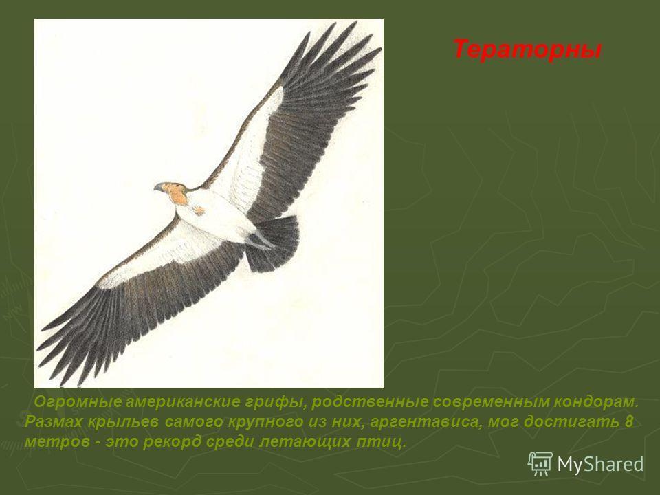 Тераторны Огромные американские грифы, родственные современным кондорам. Размах крыльев самого крупного из них, аргентависа, мог достигать 8 метров - это рекорд среди летающих птиц.