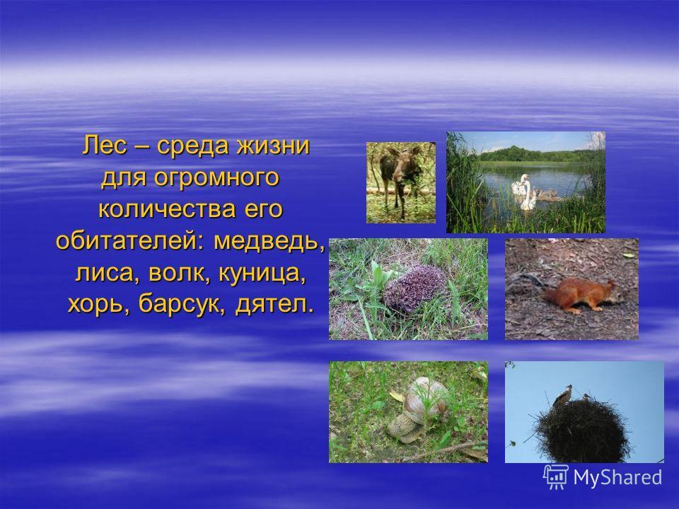 Лес – среда жизни для огромного количества его обитателей: медведь, лиса, волк, куница, хорь, барсук, дятел. Лес – среда жизни для огромного количества его обитателей: медведь, лиса, волк, куница, хорь, барсук, дятел.