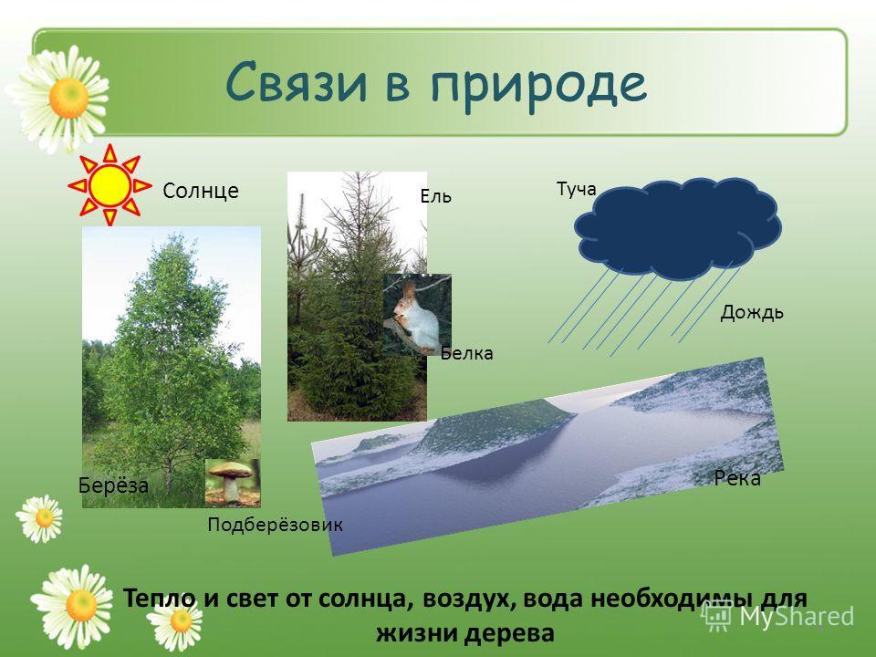 Связи в природе Солнце Берёза Подберёзовик Ель Белка Туча Дождь Река Тепло и свет от солнца, воздух, вода необходимы для жизни дерева 8