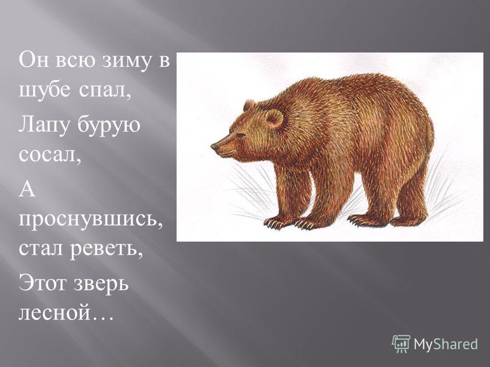Он всю зиму в шубе спал, Лапу бурую сосал, А проснувшись, стал реветь, Этот зверь лесной …