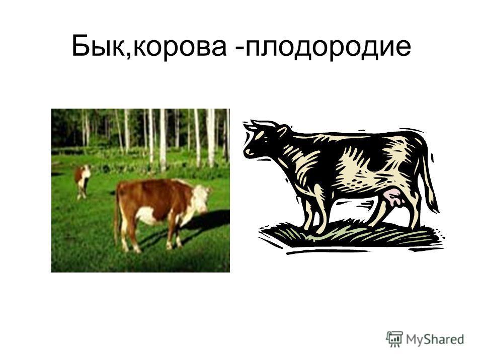 Бык,корова -плодородие