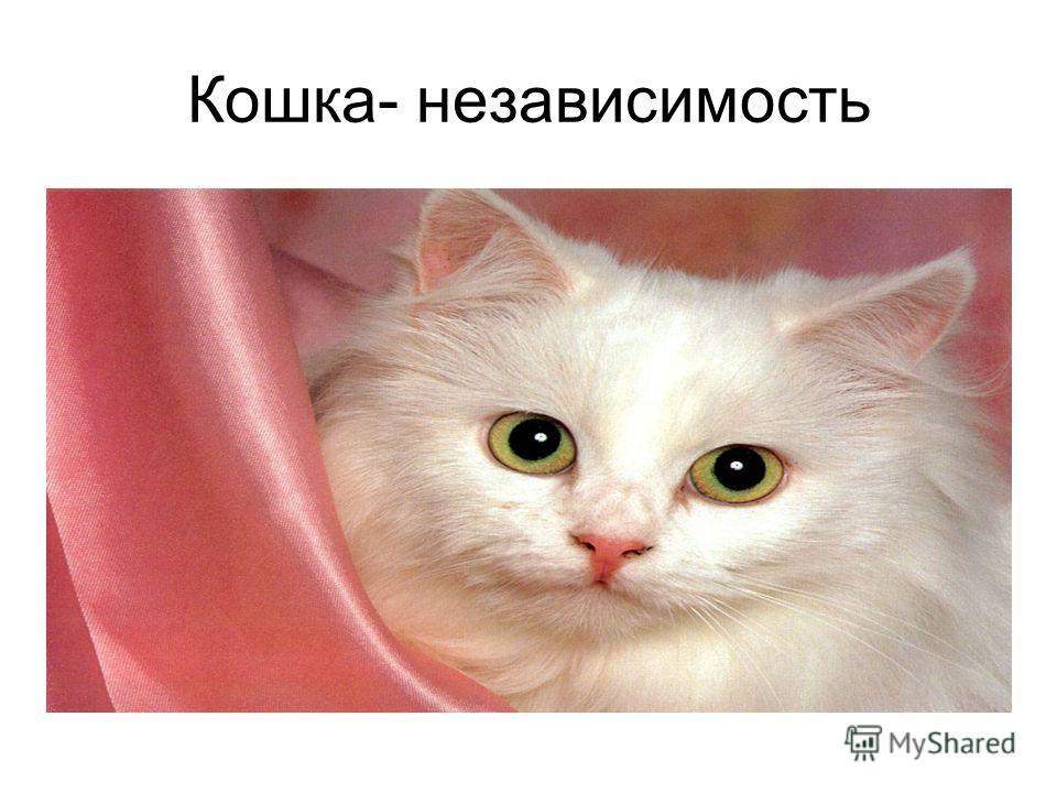 Кошка- независимость